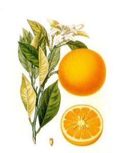 Aceite de naranja usos