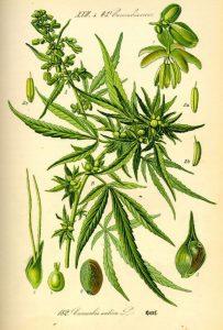 Aceite de cannabis beneficios