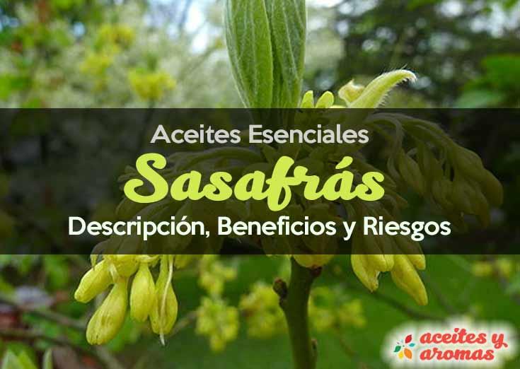 Aceite de Sasafras propiedades