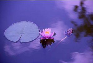 Aceites para meditacion
